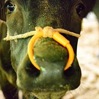 牛について
